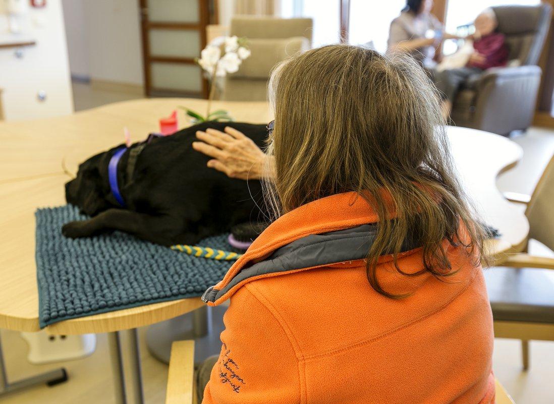 Kvinne klapper terapihund