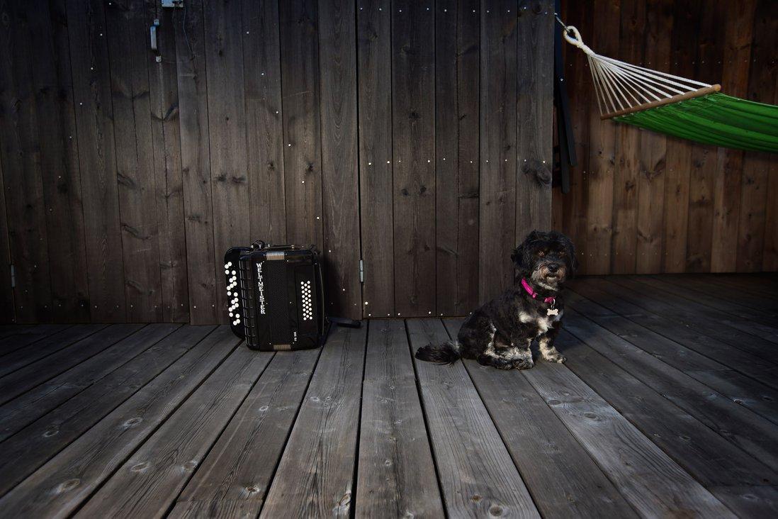 Trekkspill og hunden Yatzy
