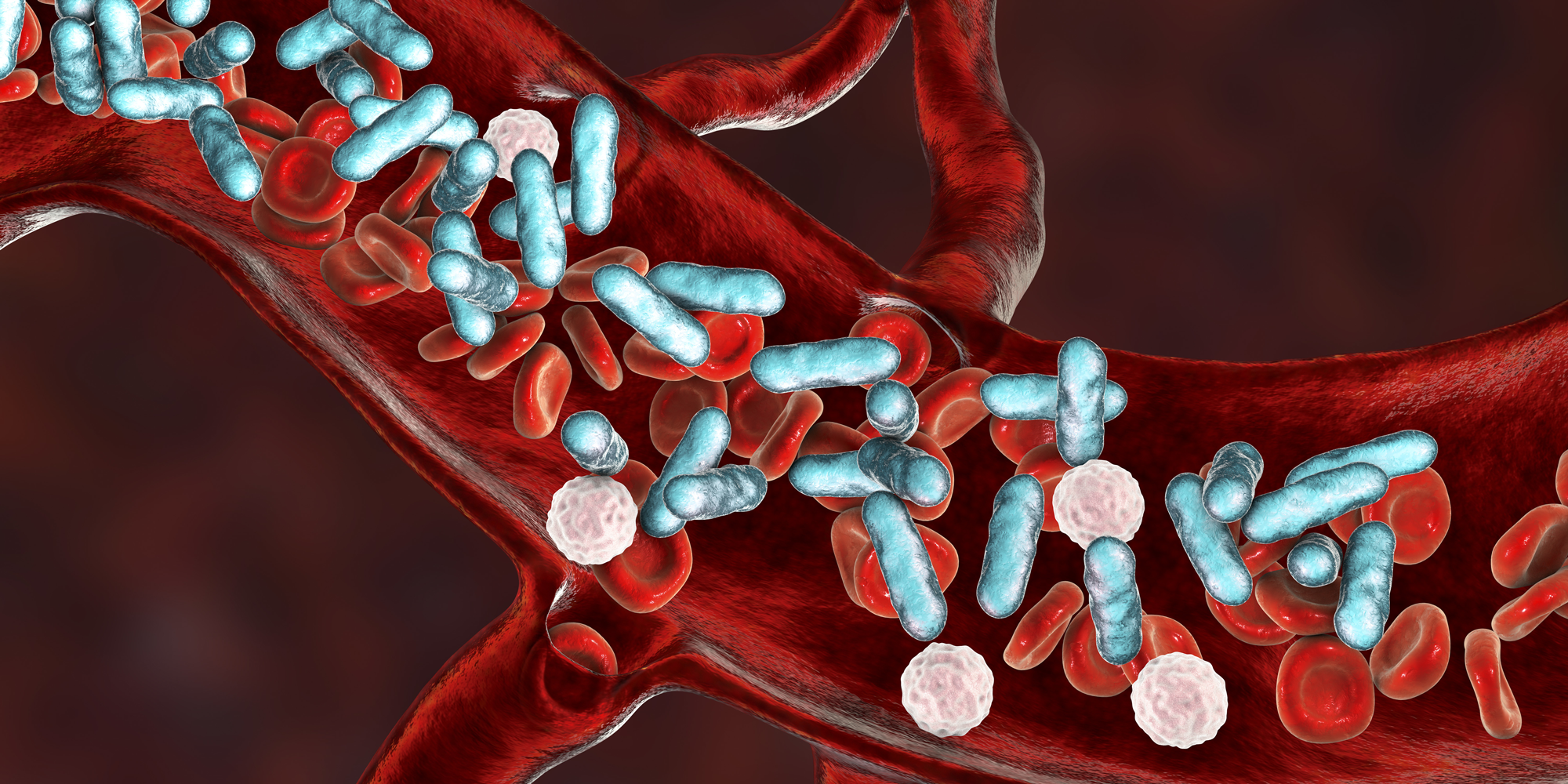 Illustrasjon av blodåre med bakterier.